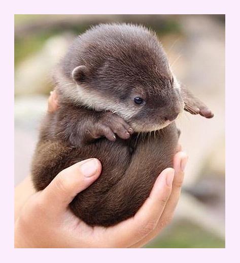 可愛すぎる,動物,赤ちゃん,画像,まとめ024