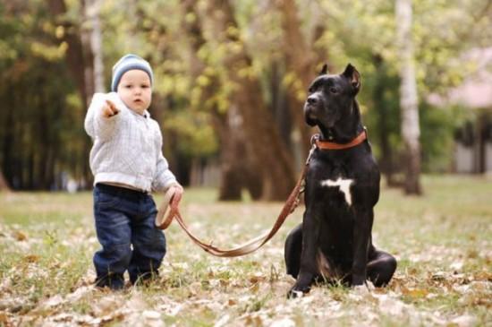 子供,大好き,動物,画像,まとめ026