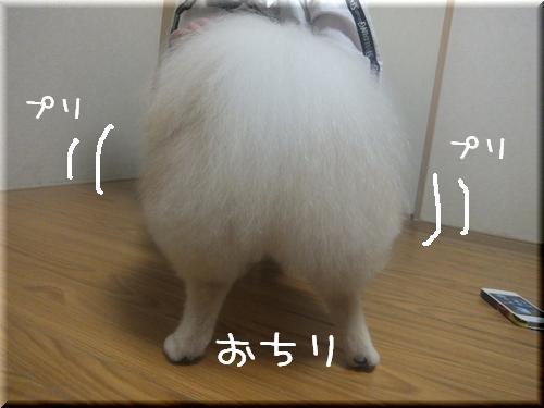 プリティ,動物,ケツ画像,まとめ032