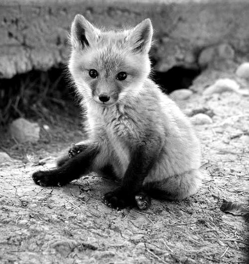 可愛すぎる,動物,赤ちゃん,画像,まとめ034