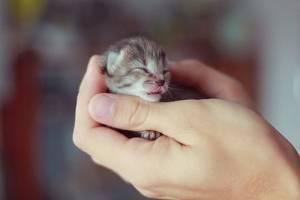 可愛すぎる,動物,赤ちゃん,画像,まとめ035