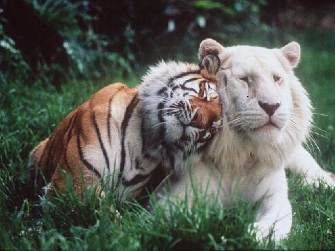 仲良し,動物,画像,まとめ036