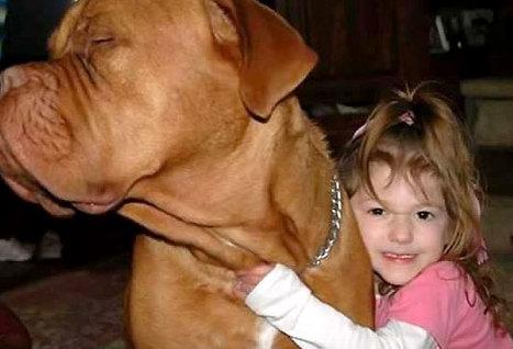 子供,大好き,動物,画像,まとめ041