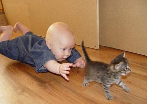 子供,大好き,動物,画像,まとめ045