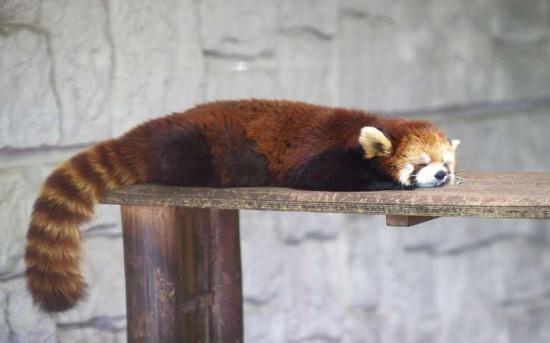 疲れをいやしてくれる,激カワ,動物,画像,まとめ046