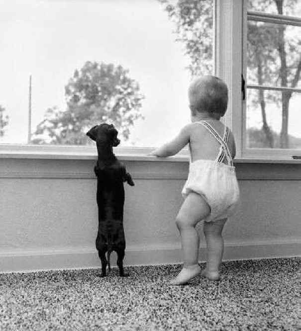 子供,大好き,動物,画像,まとめ047