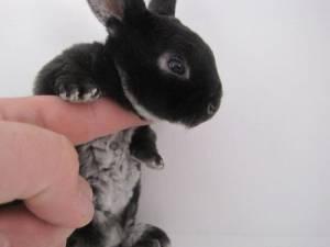 可愛すぎる,動物,赤ちゃん,画像,まとめ048