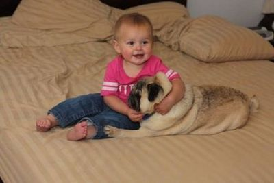 子供,大好き,動物,画像,まとめ056