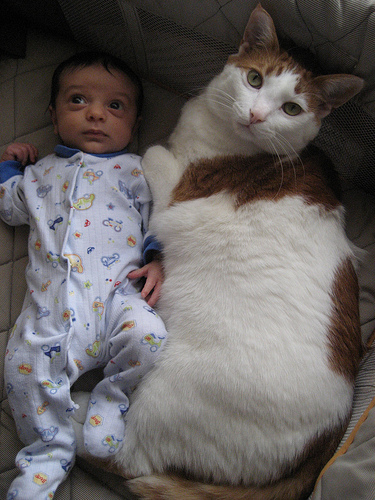 子供,大好き,動物,画像,まとめ059