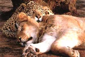 可愛すぎる,ネコ科,動物,画像,まとめ083