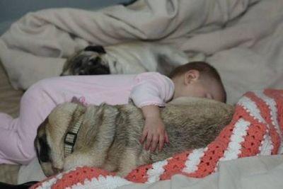 子供,大好き,動物,画像,まとめ101