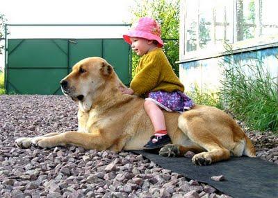 子供,大好き,動物,画像,まとめ106