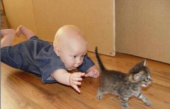 子供,大好き,動物,画像,まとめ113