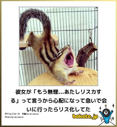 笑ったら負け,動物,bokete,おもしろ画像,まとめ235