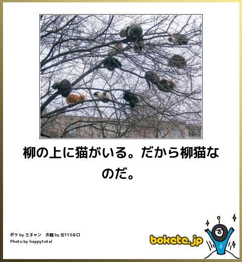 笑ったら負け,動物,bokete,おもしろ画像,まとめ432