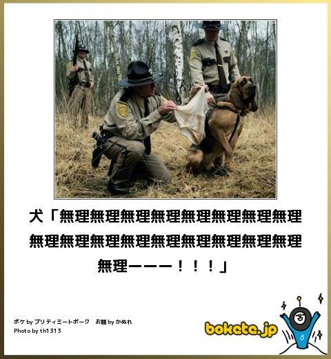 笑ったら負け,動物,bokete,おもしろ画像,まとめ541