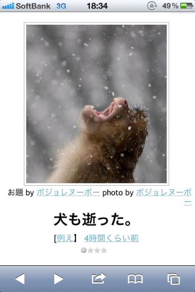 笑ったら負け,動物,bokete,おもしろ画像,まとめ577