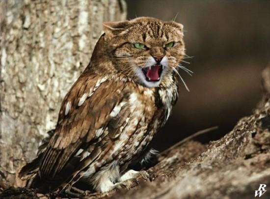 猫フクロウ,コラ画像,まとめ001