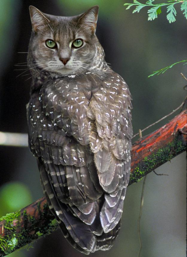 猫フクロウ,コラ画像,まとめ002