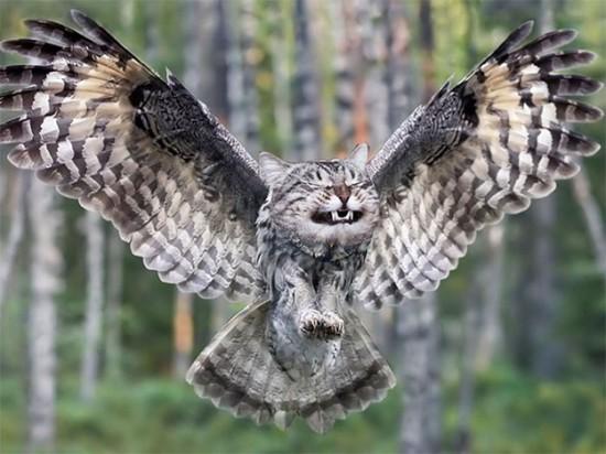 猫フクロウ,コラ画像,まとめ003