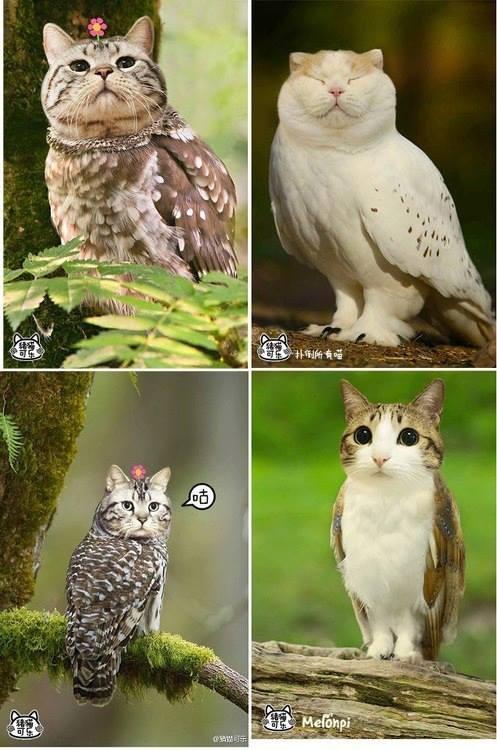 猫フクロウ,コラ画像,まとめ004