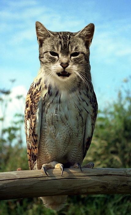 猫フクロウ,コラ画像,まとめ006