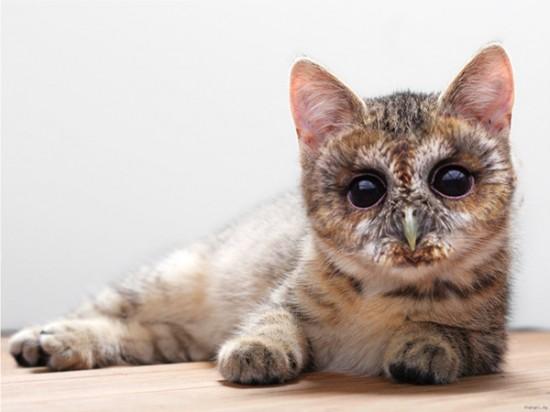 猫フクロウ,コラ画像,まとめ008
