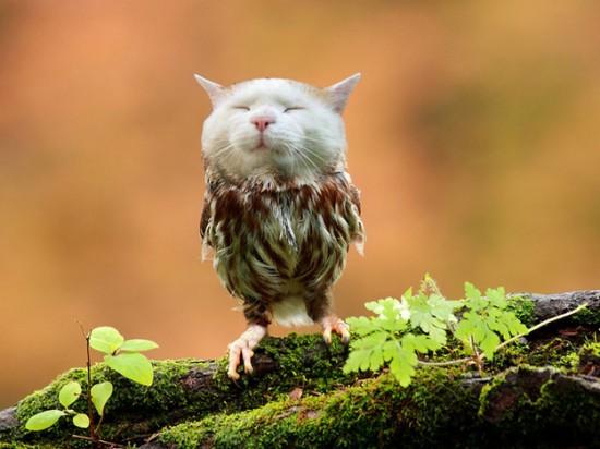 猫フクロウ,コラ画像,まとめ009