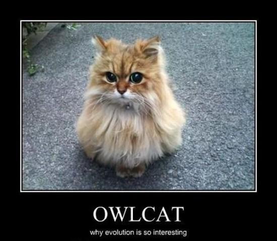 猫フクロウ,コラ画像,まとめ011