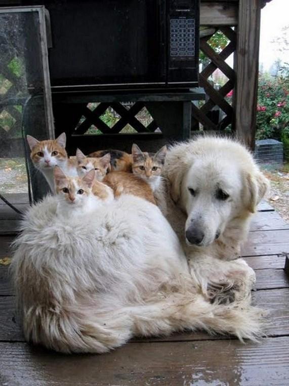 癒し,猫,画像,まとめ002