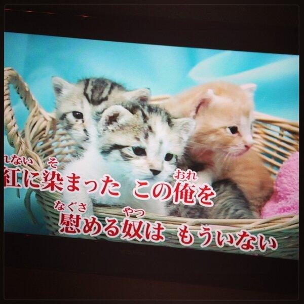 癒し,猫,画像,まとめ023