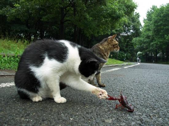 omoshi決定的瞬間,おもしろ,ネコ,画像,まとめro047