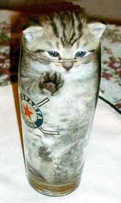 omoshi決定的瞬間,おもしろ,ネコ,画像,まとめro063