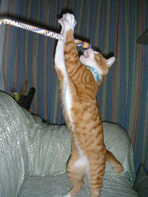 omoshi決定的瞬間,おもしろ,ネコ,画像,まとめro069