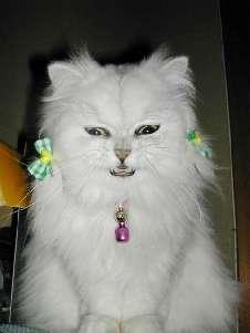 omoshi決定的瞬間,おもしろ,ネコ,画像,まとめro083