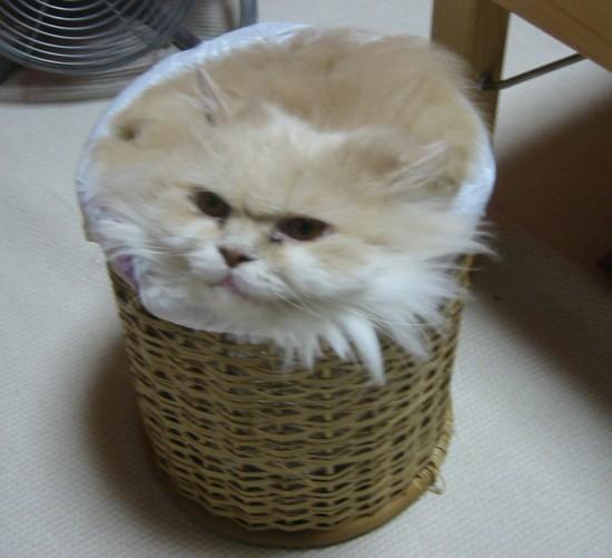 omoshi決定的瞬間,おもしろ,ネコ,画像,まとめro092