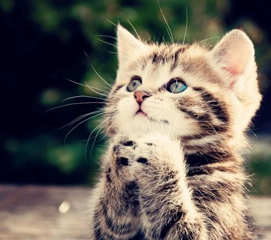 愛らしい,猫ちゃん,画像,まとめ001