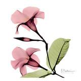 花,レントゲンフォト,画像,美しすぎる,話題に001