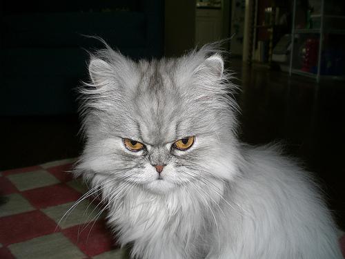 悪人顔,猫,画像,まとめ001