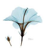 花,レントゲンフォト,画像,美しすぎる,話題に002