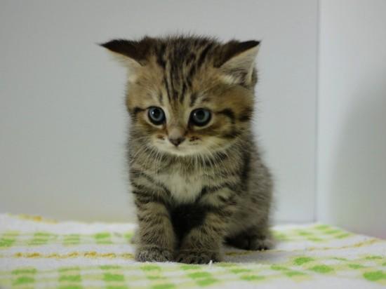 愛らしい,猫ちゃん,画像,まとめ004