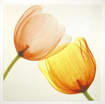 花,レントゲンフォト,画像,美しすぎる,話題に005