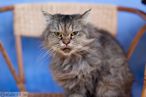 悪人顔,猫,画像,まとめ005