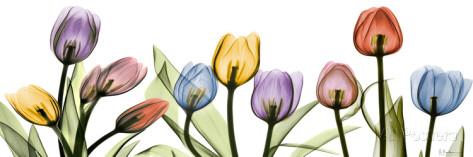 花,レントゲンフォト,画像,美しすぎる,話題に006