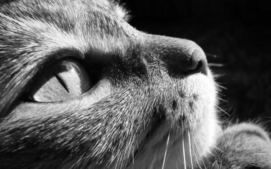 動物,美しい,モノクロ写真,まとめ006