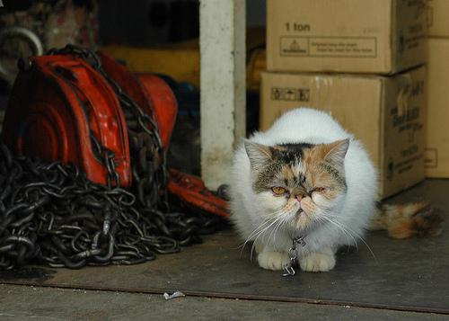 悪人顔,猫,画像,まとめ006