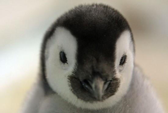 ぬいぐるみ,可愛い,子ペンギン,画像,まとめ007