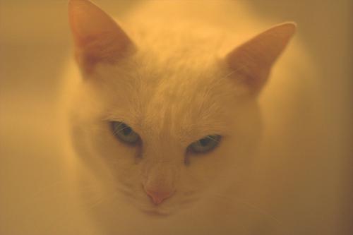 悪人顔,猫,画像,まとめ007