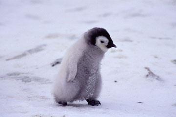 ぬいぐるみ,可愛い,子ペンギン,画像,まとめ008