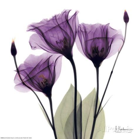 花,レントゲンフォト,画像,美しすぎる,話題に008